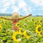 sunflowers-3640938_1920